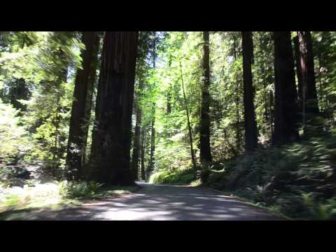Drive Through Humboldt Redwoods State Park- California