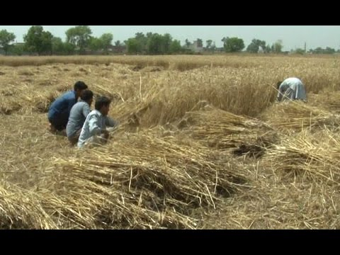 Farmers on Wheat Crop Prices