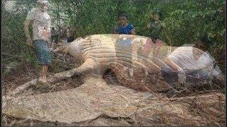 Chuyện lạ có thật: Cá voi khổng lồ xuất hiện trong rừng khiến ai cũng há hốc mồm vì ngạc nhiên