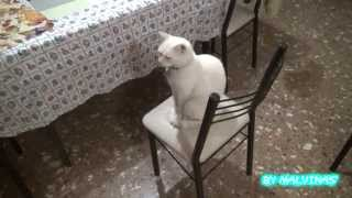 Aquiles Descansando - Full HD