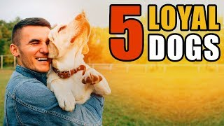 5 Stories of the Most Loyal Dogs | Talkin' Dogs List Show