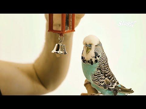 BODRI zenekar - Baj van! (Official Music Video)