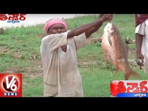 Villagers Fish Hunting At Ravula Stream   Adilabad   Teenmaar News   V6 News