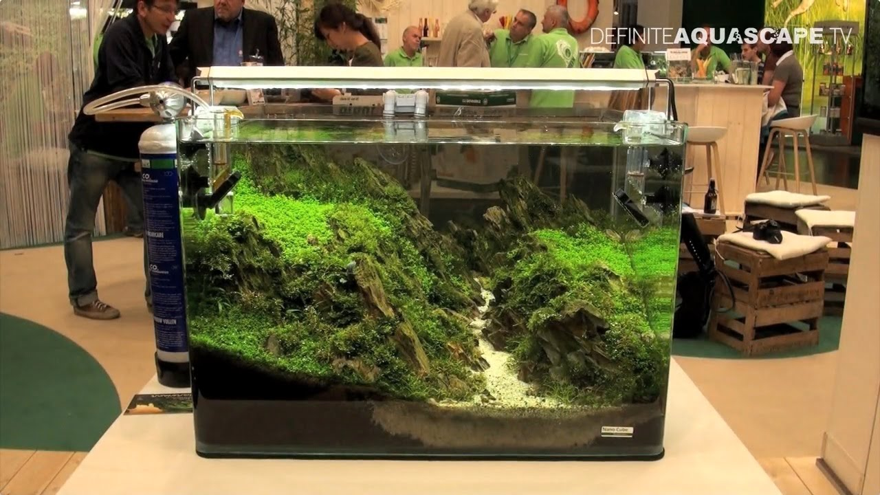 Aquarium ideas from interzoo 2014 dennerle youtube for Aquarium boule 20 litres