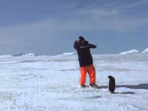 Пингвин напугал человека. Прикол