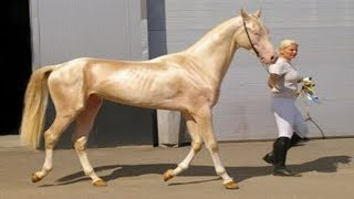 7 Kuda Paling Unik Yang Ternyata Ada Di Dunia !!! Bagus Bangat