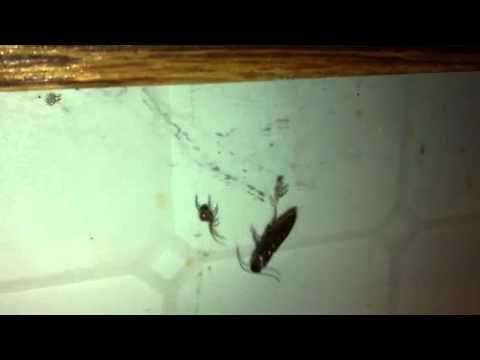 Spider attacks bug by my kitchen sink Part 2