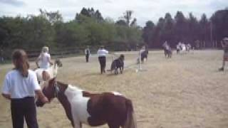 Miniature Horses Gone WIld!