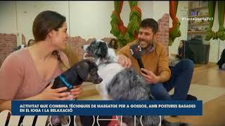 [DOGA] Yoga para perros en TV3.