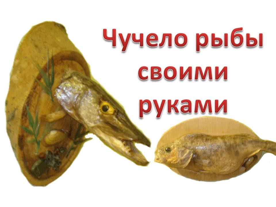 Как сделать чучело головы рыбы своими руками