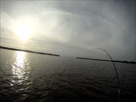 Florida Kayak Fishing Tampa Bay for tailing reds www.Jmsnookykayakcharters.com