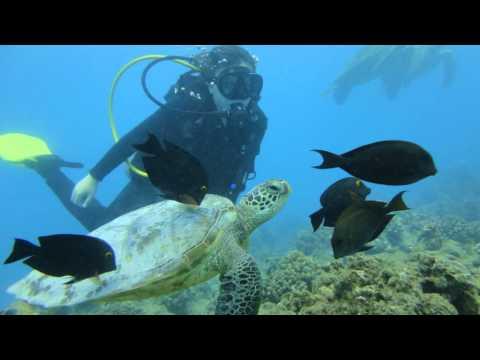Hawaiian Adventures Underwater!