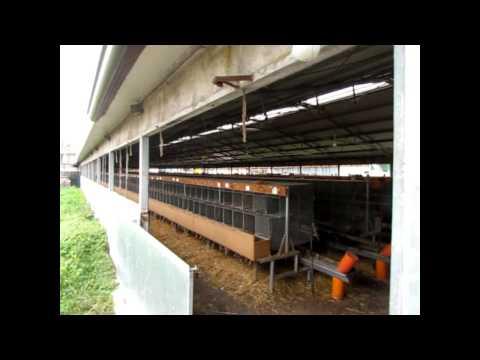 CHIUSO l'allevamento di visoni a Montirone (BS)