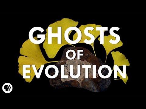 Ghosts Of Evolution