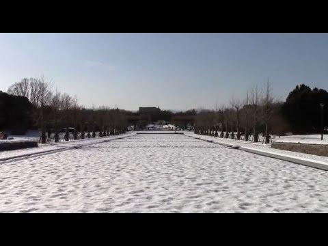 Showa Memorial Park in Tokyo Japan.  2014 Winter
