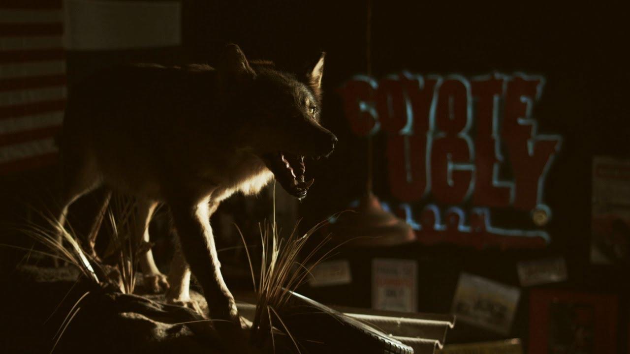 смотреть гадкий койот бар: