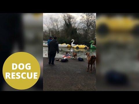 Una mujer salva a su perro que se había caído en un lago helado