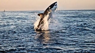 Searching for Great White Sharks in False Bay (Cape Town)