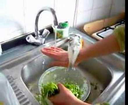 kuş banyo