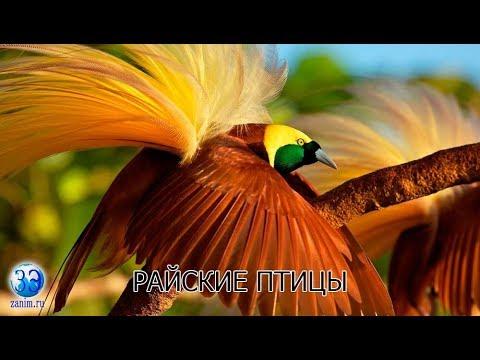 Серия 8. Райские птицы - самые красивые создания на земле.
