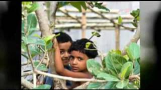 AMAR MON PAKHITA - Desher gaan - Bangladesher gaan