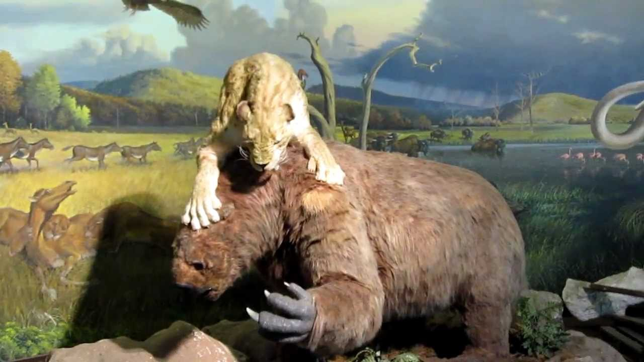 Sabertooth Tiger Versus Giant Sloth Youtube