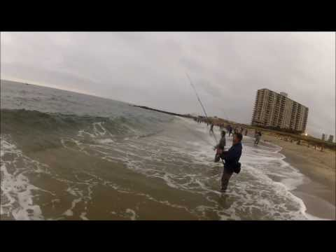 Striped Bass and Bluefish Blitzing on Peanut Bunker - SURF FISHING NJ