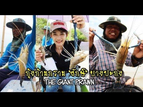 ตกกุ้งยักษ์ ลุ่มแม่น้ำบางปะกง (The Giant Prawn Fishing) By MAYME FishingEZ