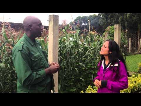 Kimberly's Travel Adventures - Rwanda with Edward the Gorilla Translator