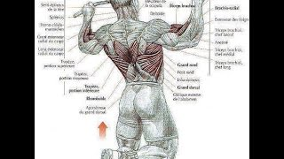 Bodybuilding Back Exercises