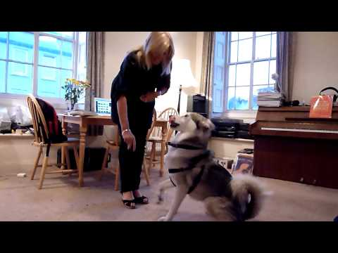 Husky Dog And Blonde In Perfect Harmony video