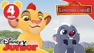 Løvenes garde | Bunga & Kion 🦁- Disney Junior Norge