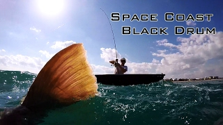 Space Coast Black Drum - Sight Fishing