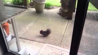 A Squirrel sharing Food Scattered by the Birds