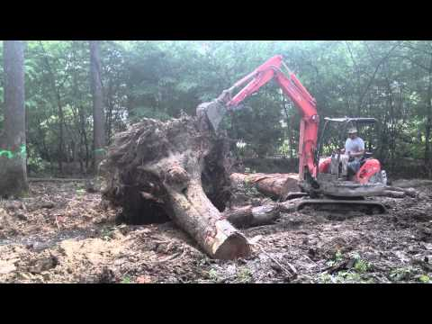 Knocking Down a Monster Tree with a Mini Excavator