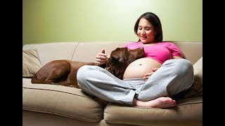 Cutest Dogs Protecting Pregnant Mom 's Belly