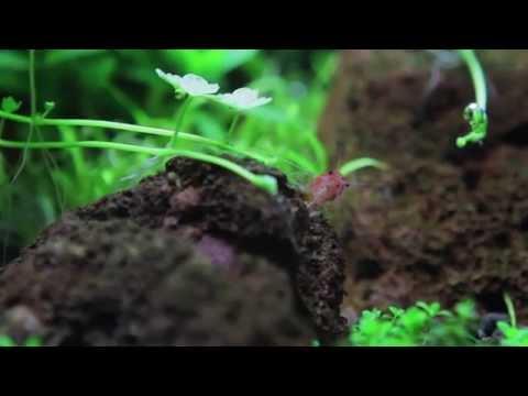 Aqua Amazonia Soil (HD)