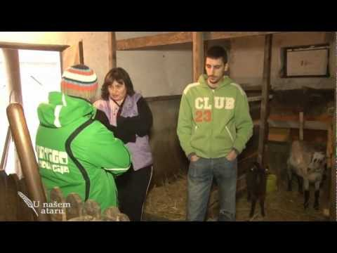 Uzgoj koza i kalifornijskih glista u Sumadiji - U nasem ataru 473