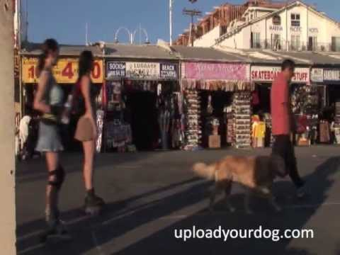 Sexy Venice Beach Hot Beautiful Babe Dog Tries to Pick-Up Flirts with Women...Ha Ha Ha