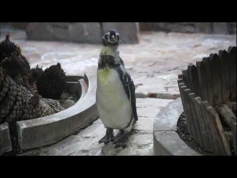 江戸川区自然動物園 追いかけられるちくわ