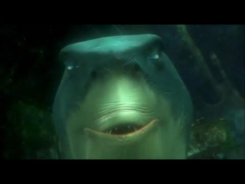 Gdzie jest nemo rekiny