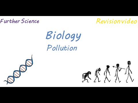 B3: Pollution (Revision)