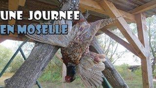 UNE JOURNÉE DE CHASSE EN MOSELLE !!! Faisans, Ramiers...