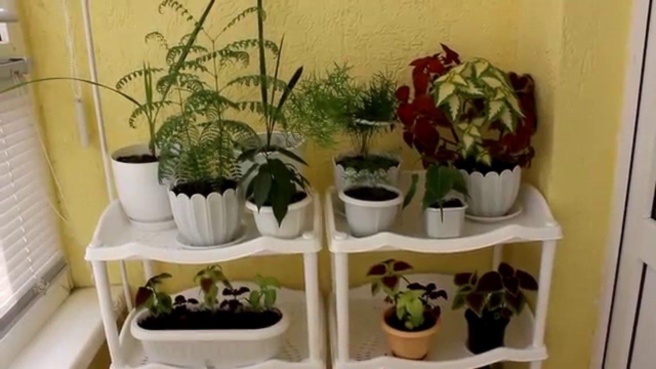 Выращивание семенами комнатных цветов в домашних условиях