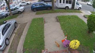 garfield chasing a squirrel