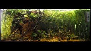 Débranchez vos filtres! Aquarium naturel/low tech: Quoi?Comment?Résultats après 8 mois!