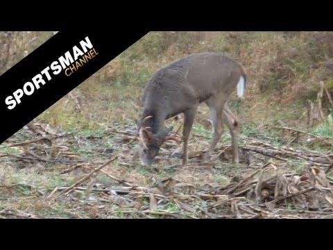 Hunting Whitetails from a Ground Blind on Point Blank Outdoors!