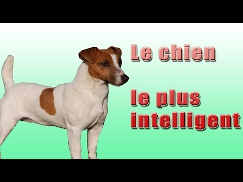 Le Chien Le plus Intelligent (the most intelligent dogs) LOOK !