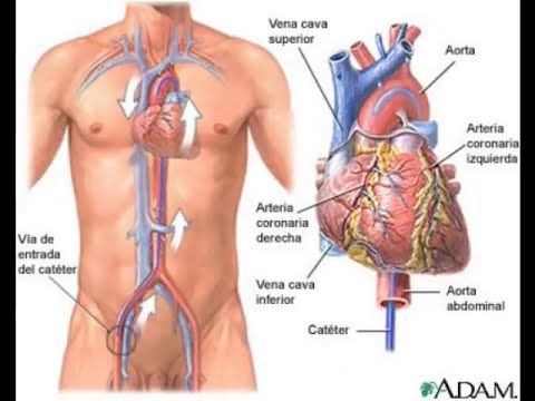sistema respiratorio y circulatorio  humano . Equipo n°3.wmv