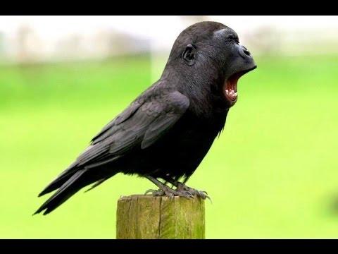 😂😂 САМЫЕ НЕОБЫЧНЫЕ и НЕВЕРОЯТНЫЕ ГИБРИДЫ ЖИВОТНЫХ !!! 😂😂 Смешное видео